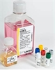 LONZA  EGM-2-内皮细胞培养基(现货促销)