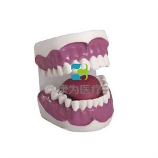 """""""康为医疗""""牙护理保健模型(28颗牙)"""