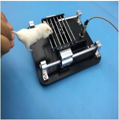 大小鼠抓力测定仪(新型)