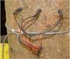 SF-L探针式植物茎流测量系统